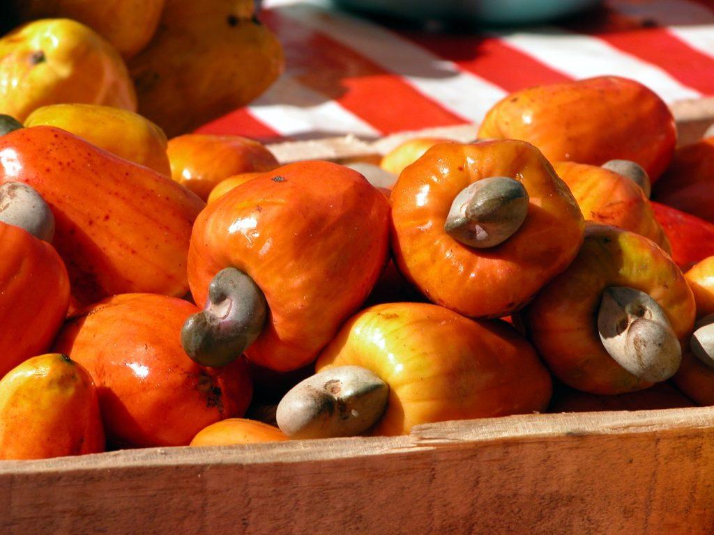 Il Caju, caratteristico frutto del Nord Est del Brasile, da cui si ottengono i famosi anacardi